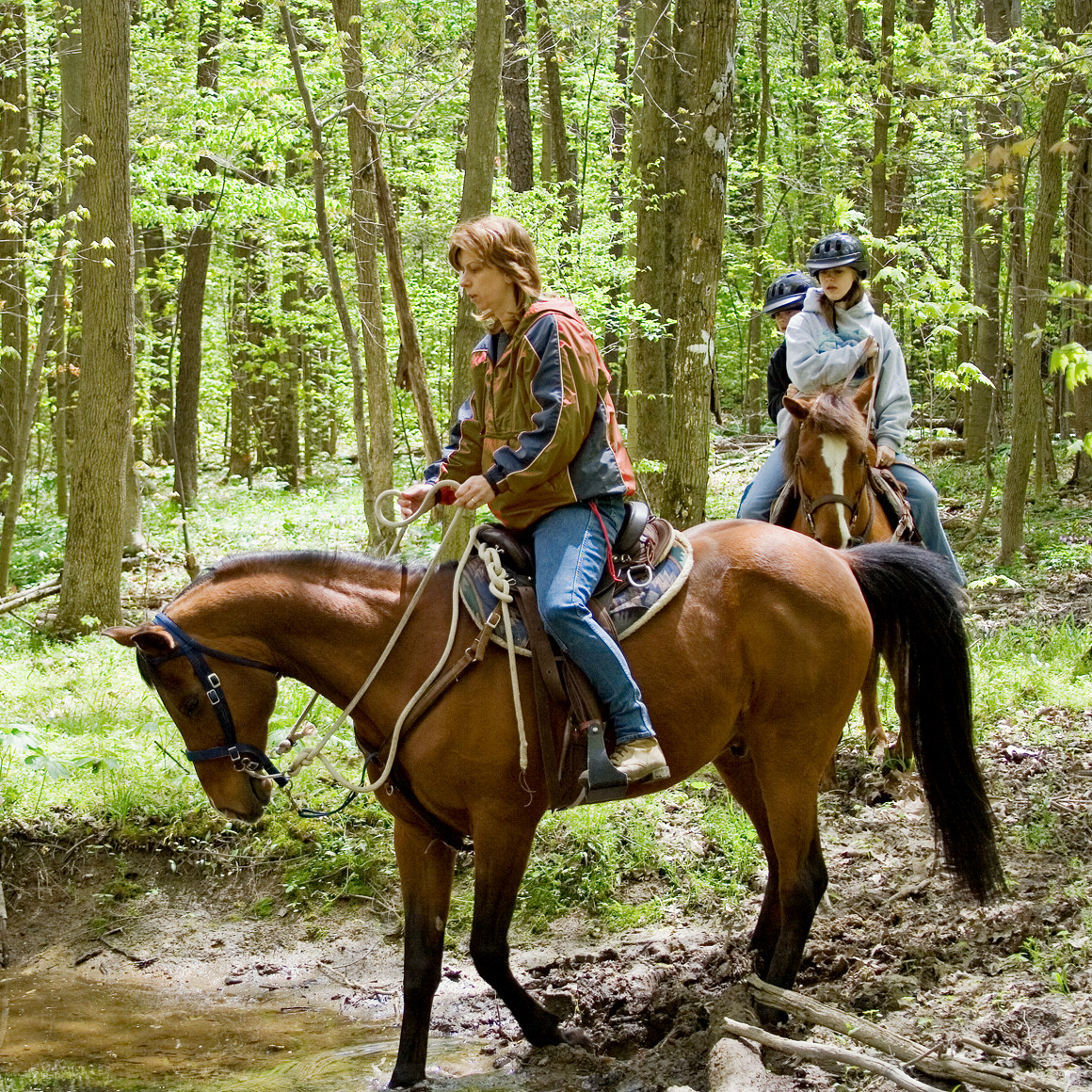 ACE-Adventure-Resort-Horseback-Riding-Trails.jpg