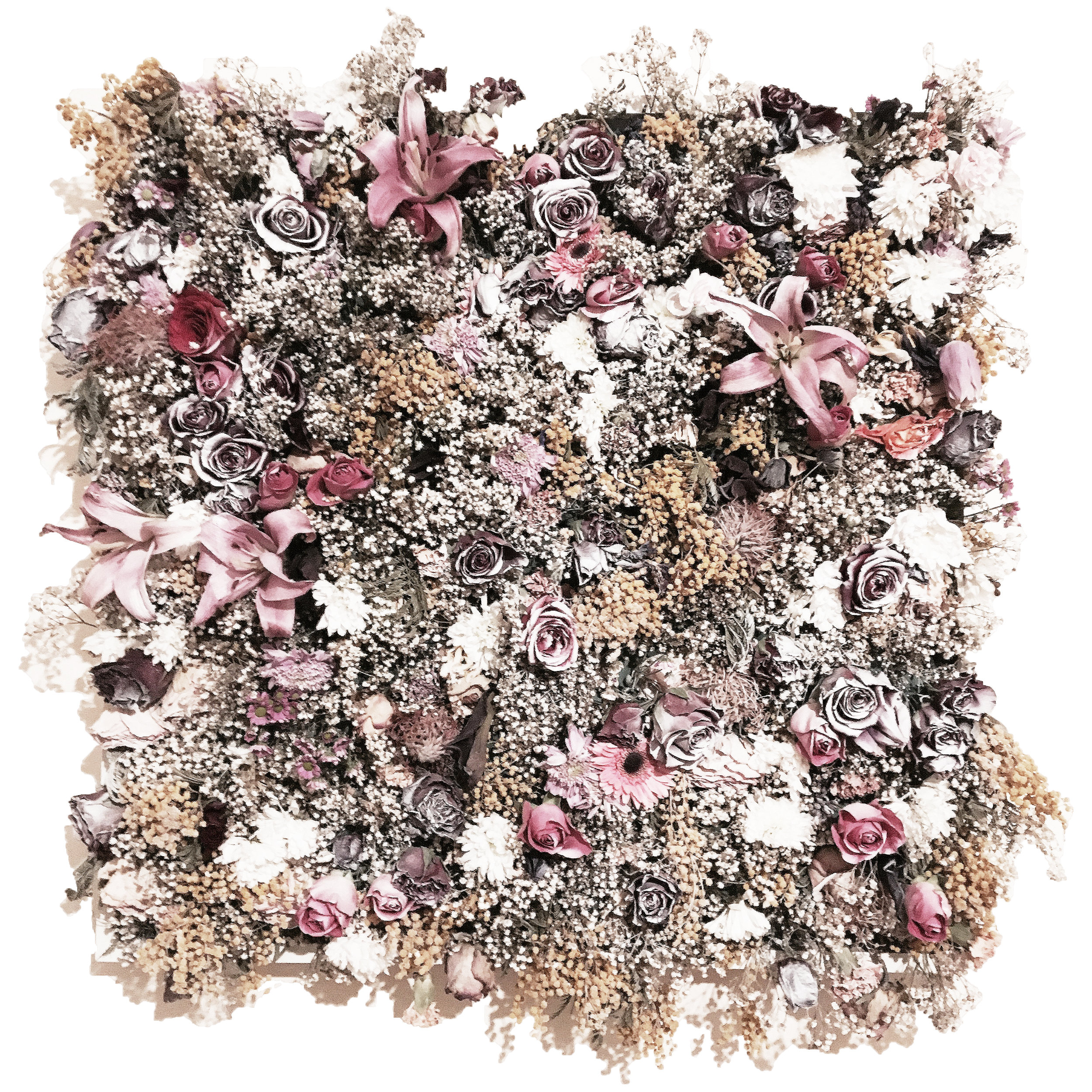"""Disfigurement in Decay"" - Dried flowers on floral foam, framed - 66 cm x 66 cm"