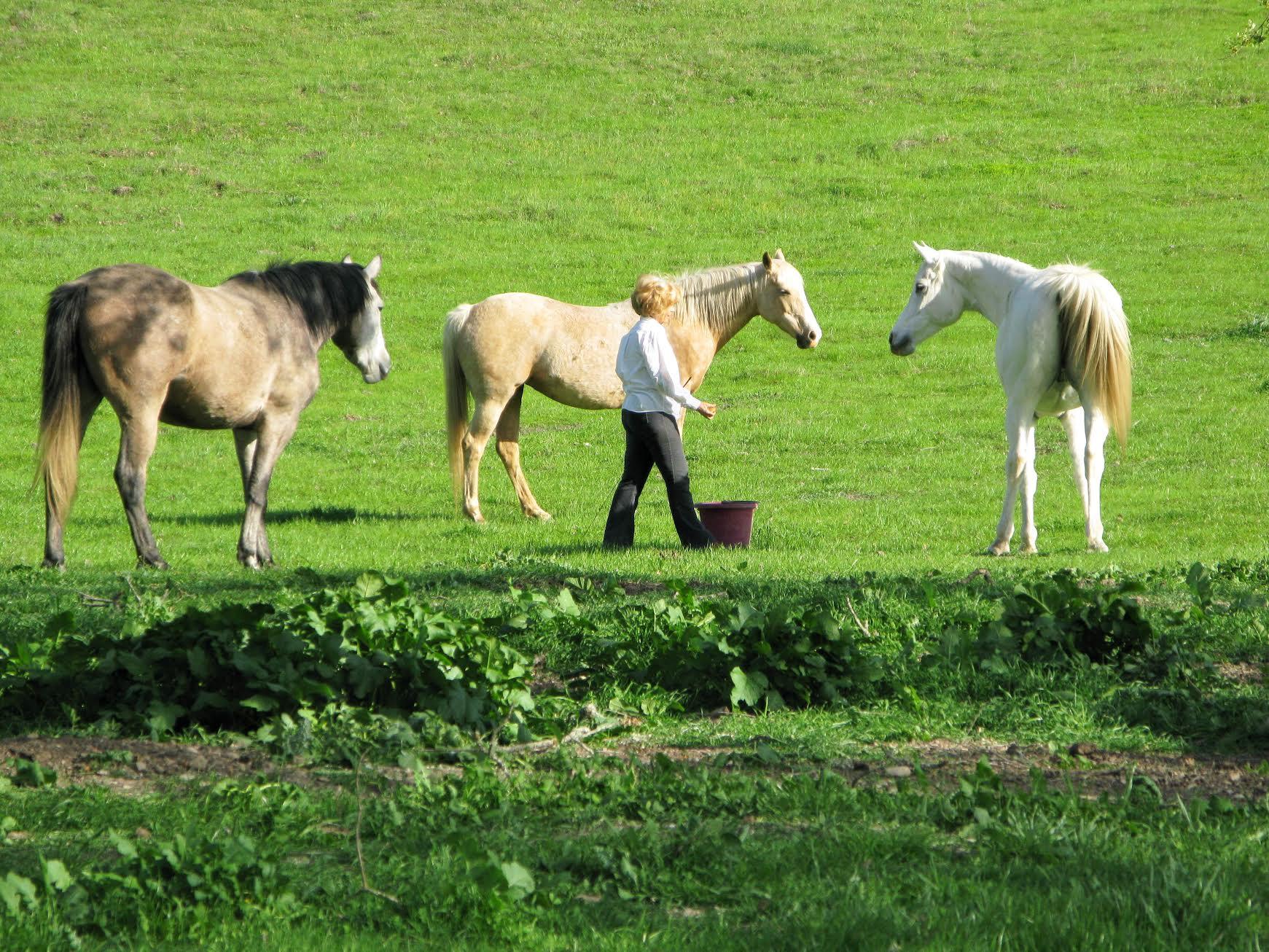 Carolyn training several horses while Sharing Territory