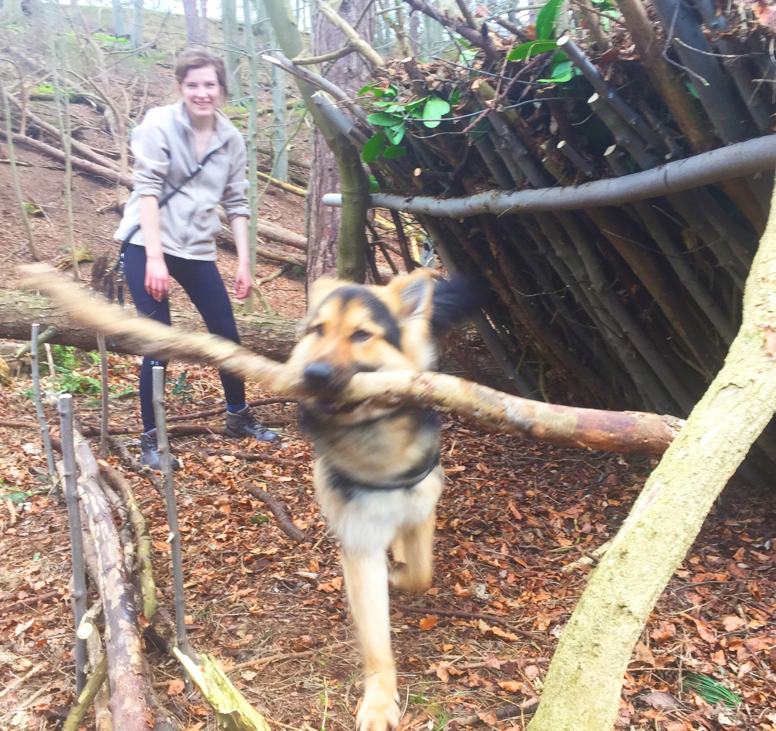 Shelter Building (with help from Logan the German Shepherd)!
