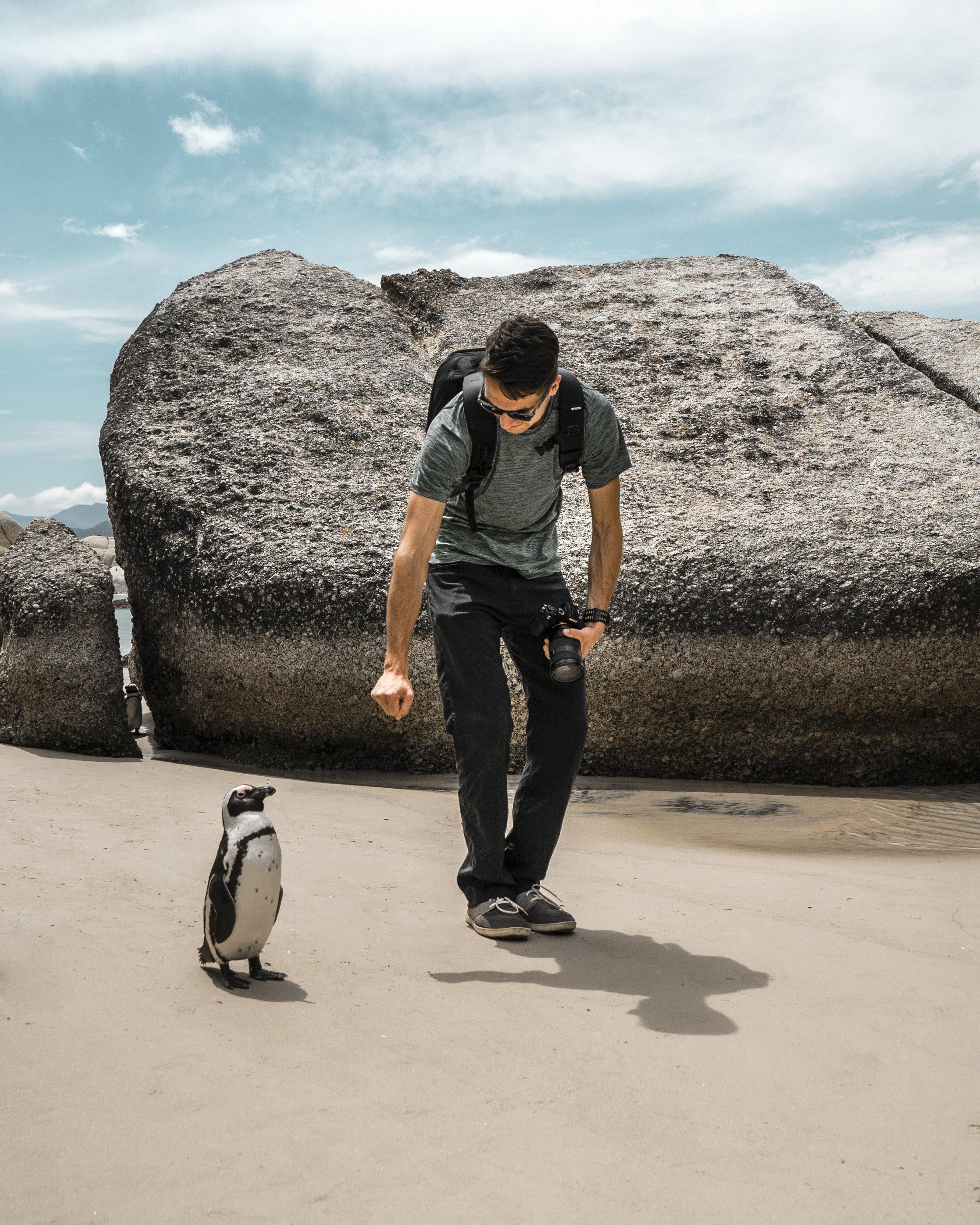 Penguins--2.jpg