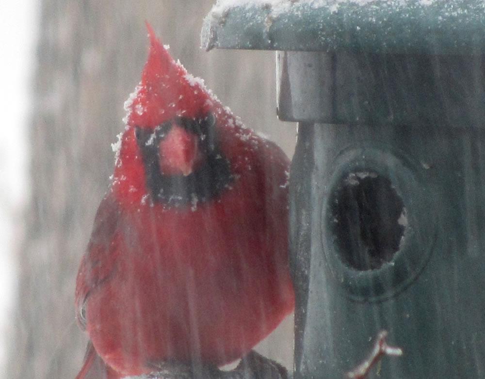 Blizzard Bird