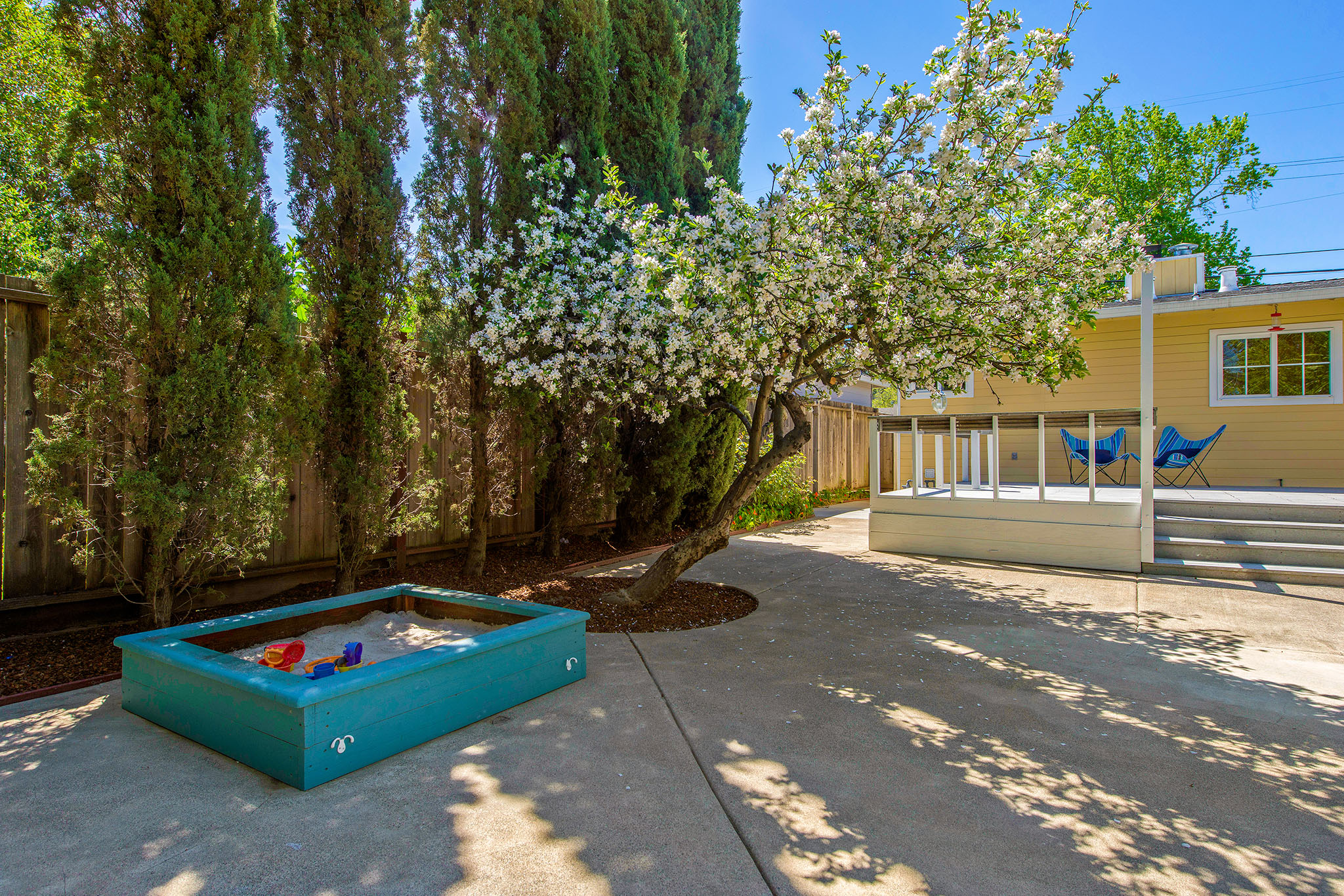 Yard - sandbox tree.jpg