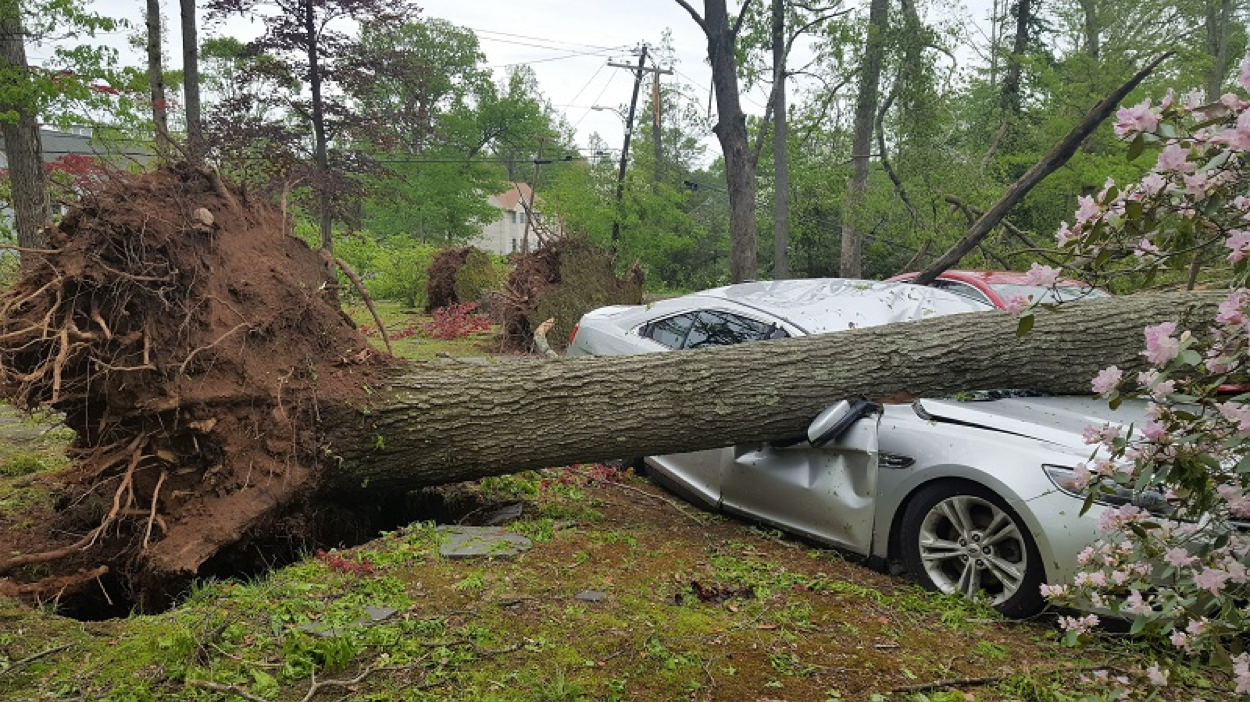 While Adele's car was in her garage, her neighbor was not so lucky.