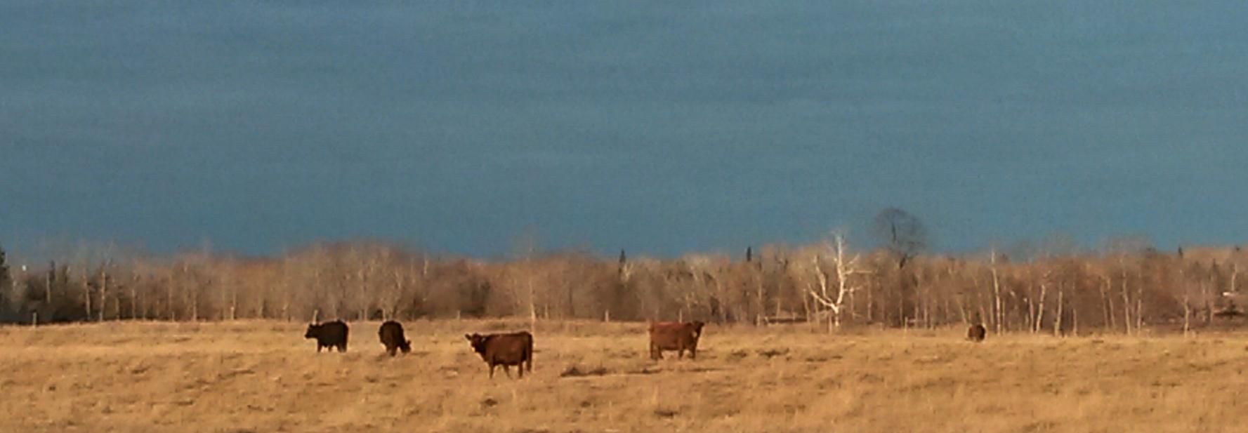 wide farm shot.jpg