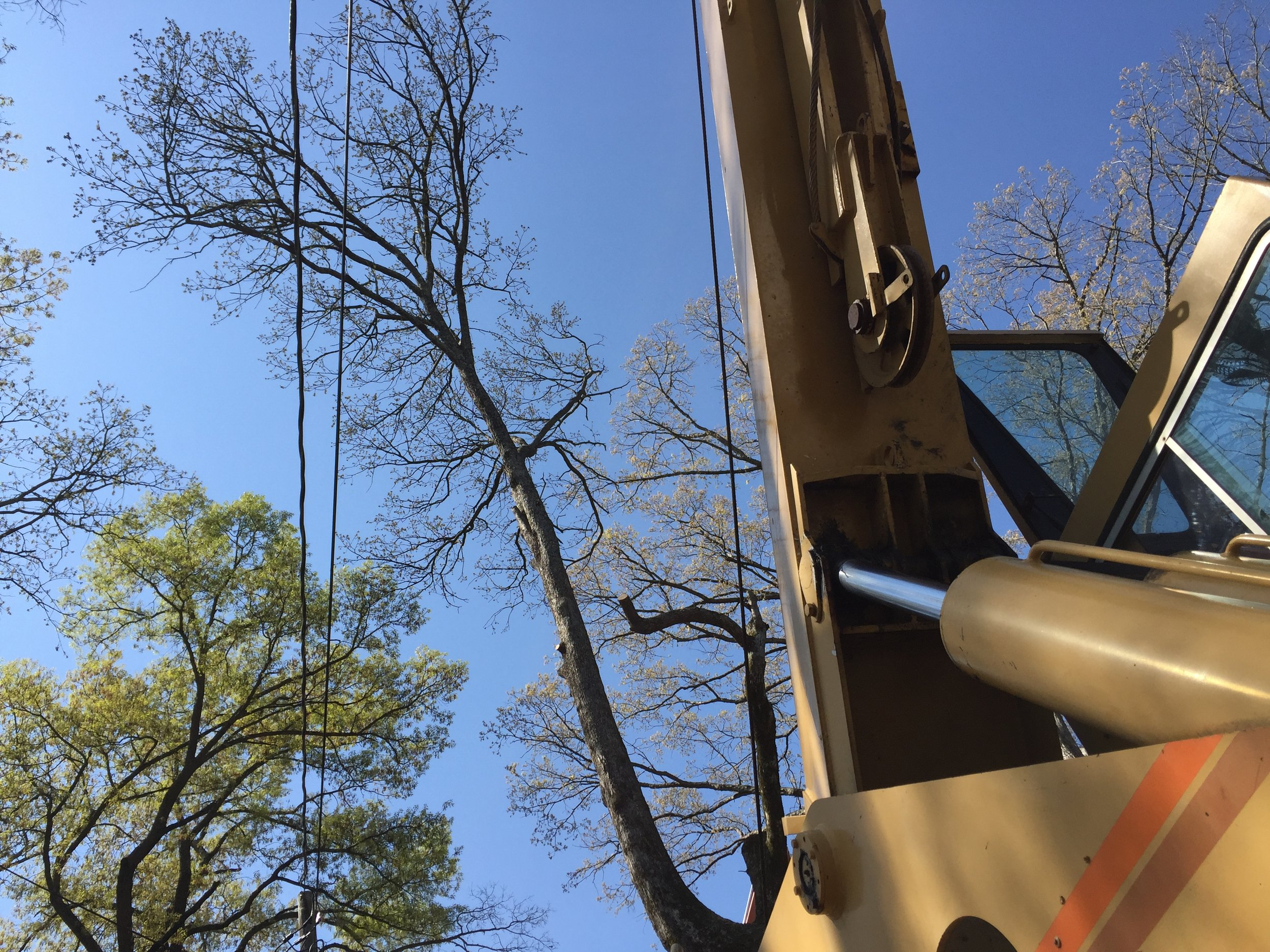 Limbwalkers Tree & Crane Service setting up our grove TMS 522.