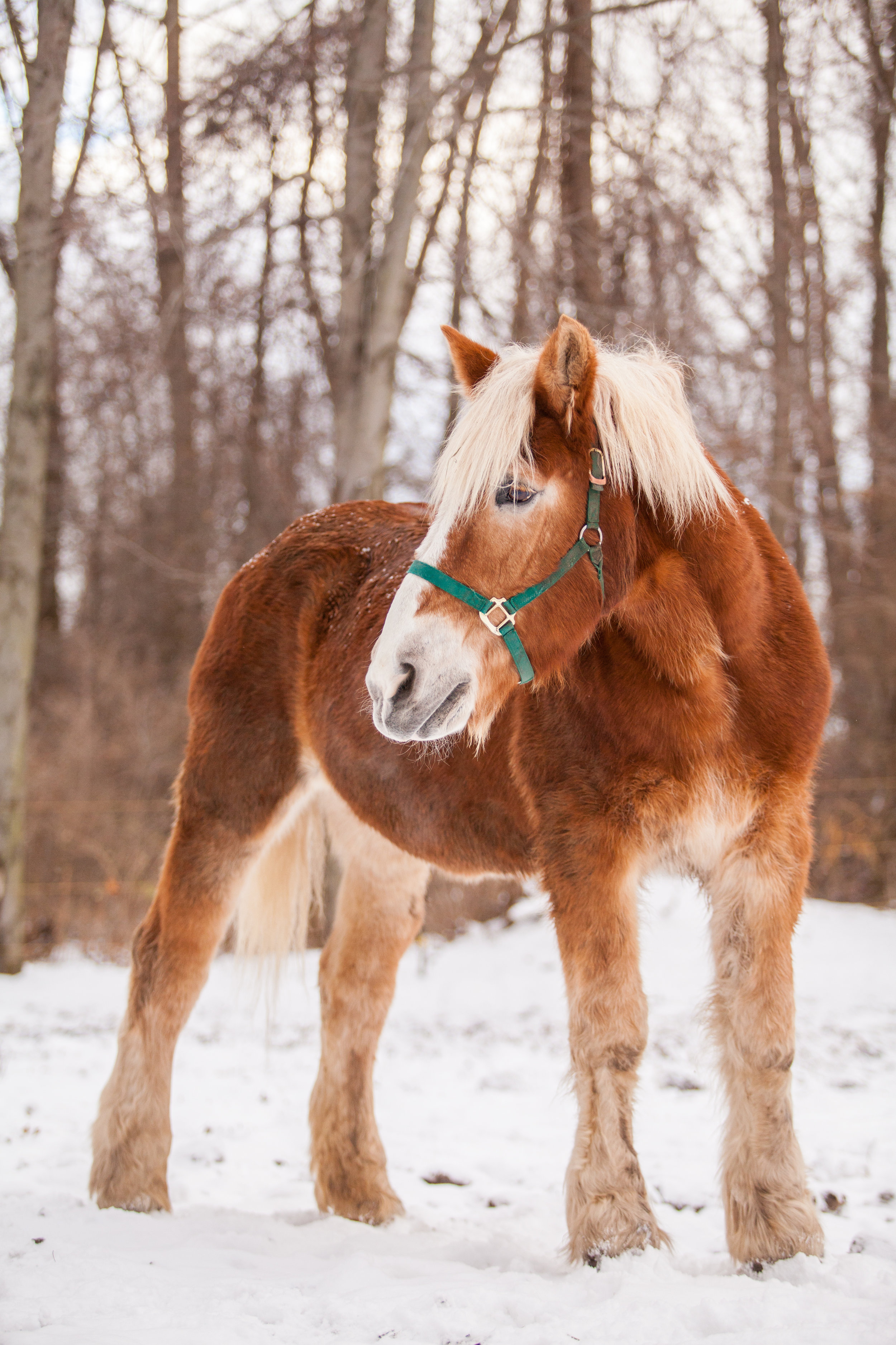 Izzy the horse
