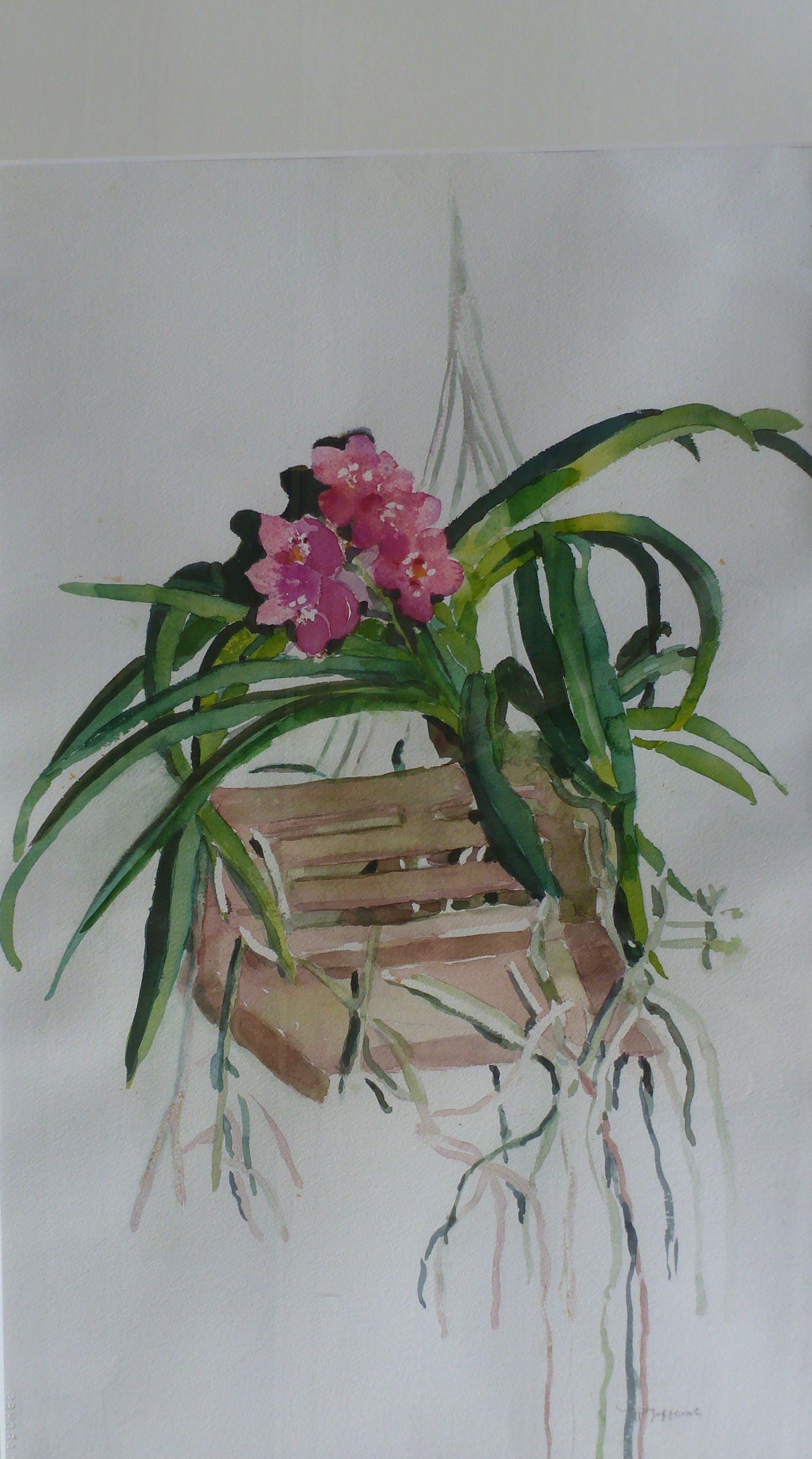 Vanda Orchids  Watercolor  Framed  28hx22w  $300