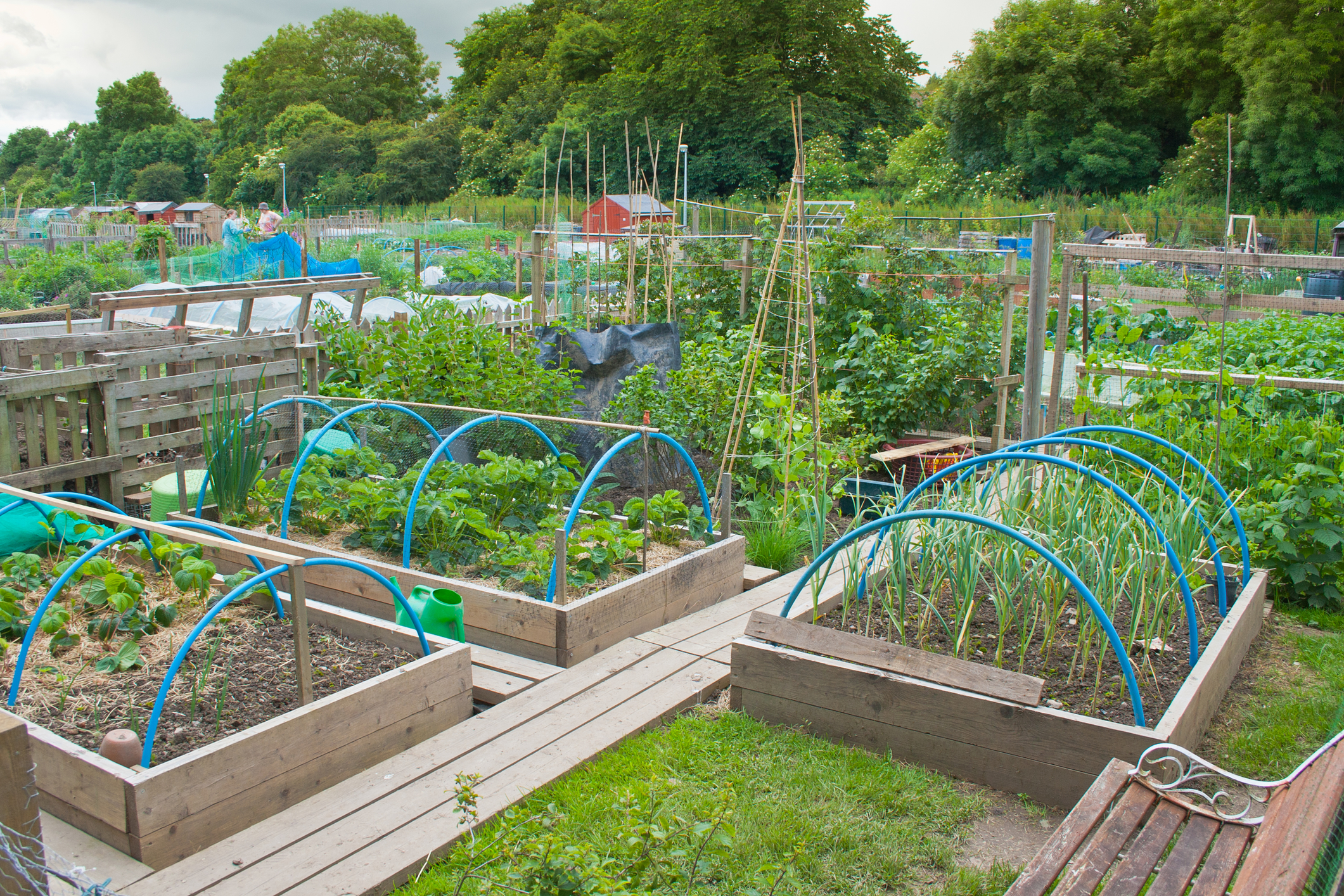 Allotment Image.jpg