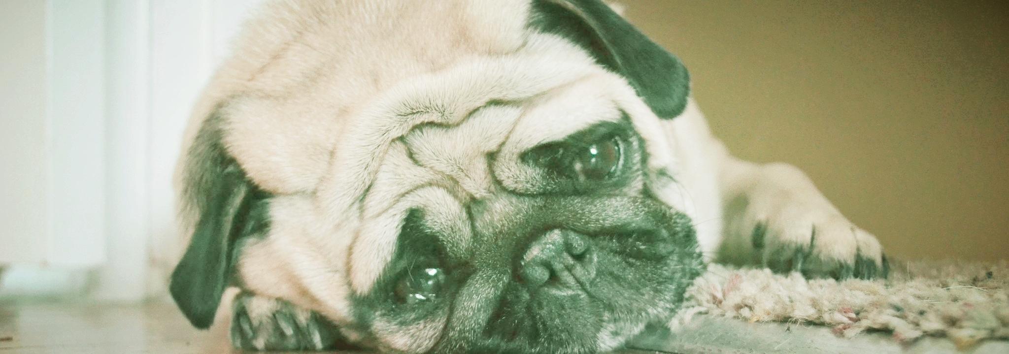 Phoenix at home pet euthanasia