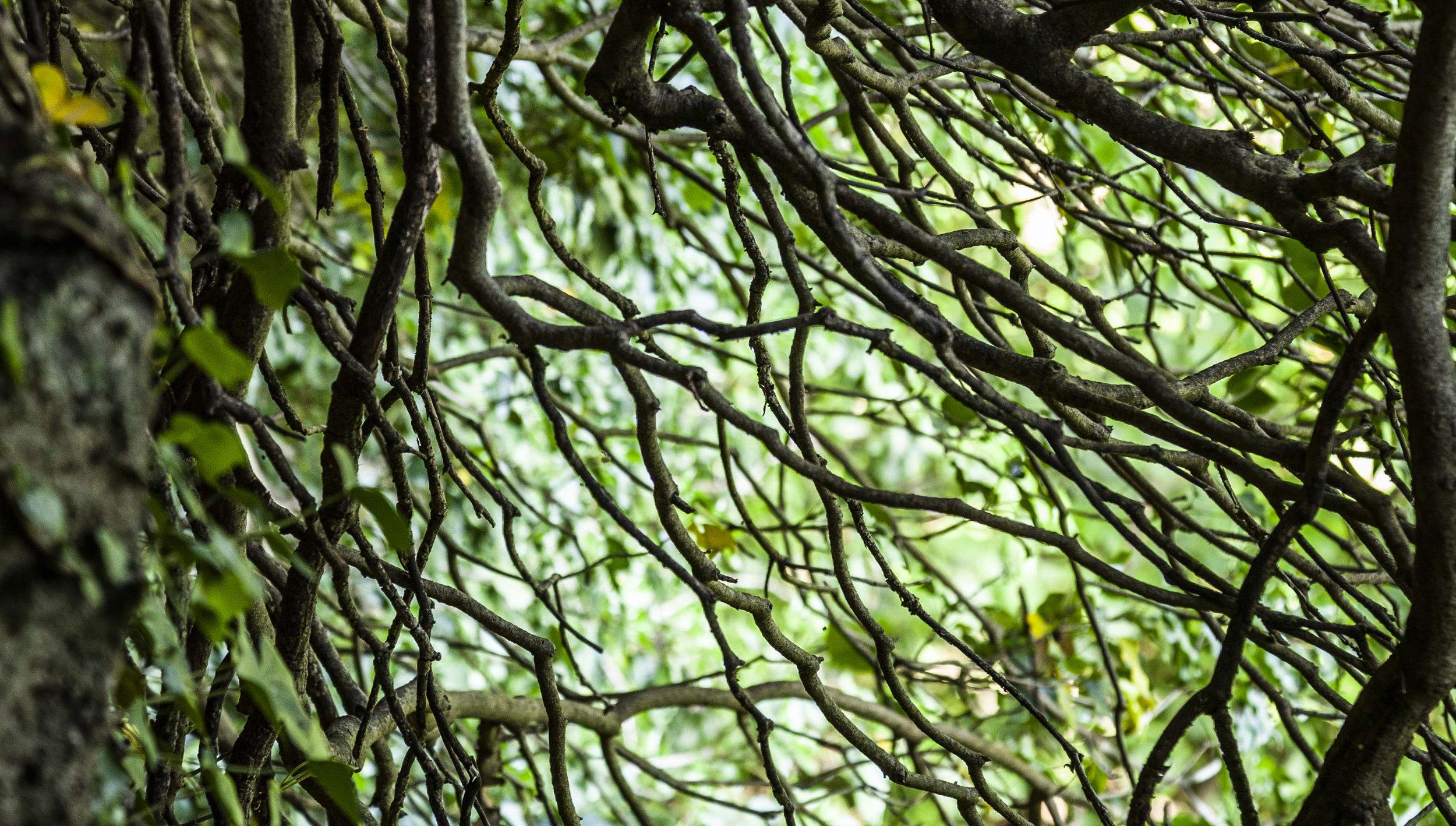 Yogatrek in silenzio nel bosco - Woodpark (Itri)