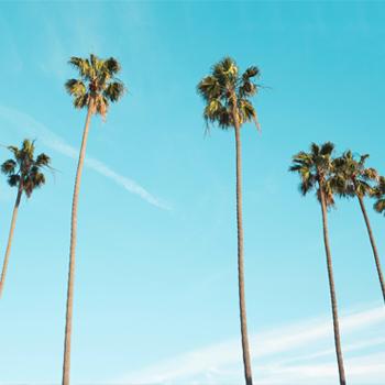 OPENING SOON - Hollywood, California