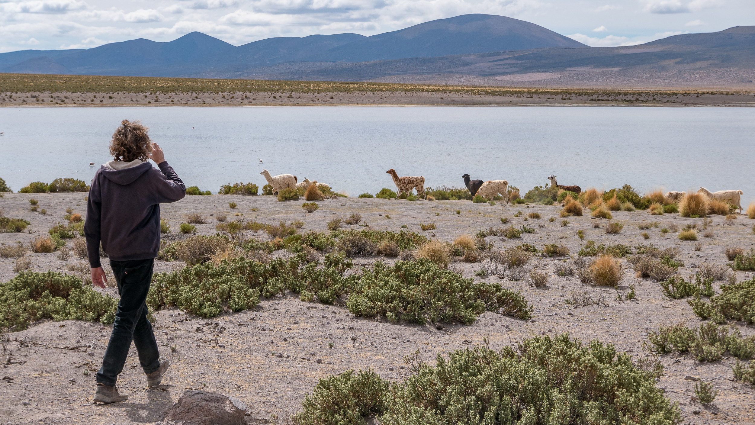 The llama-filmer