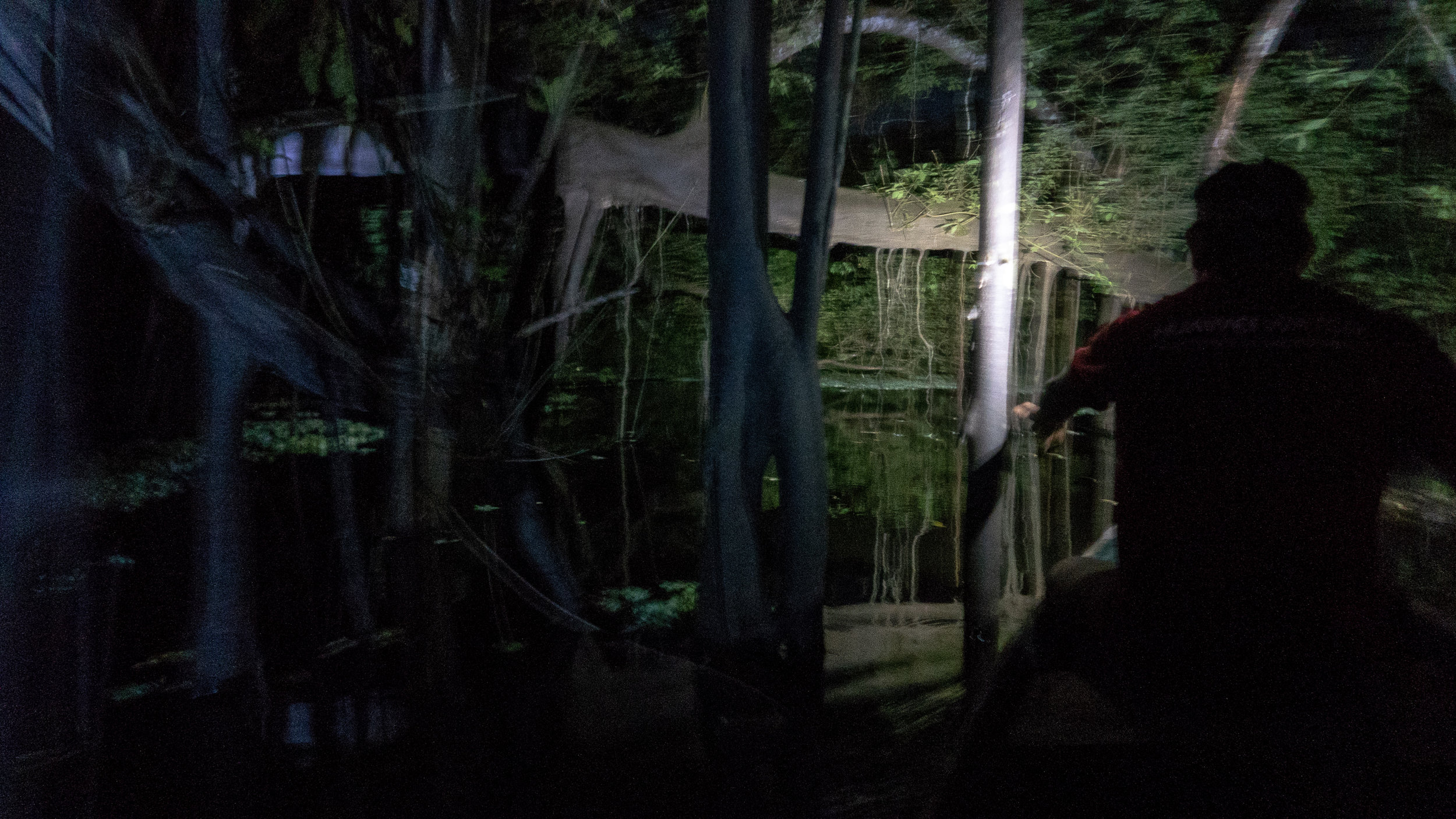 Magical night-time canoing among the rainforest