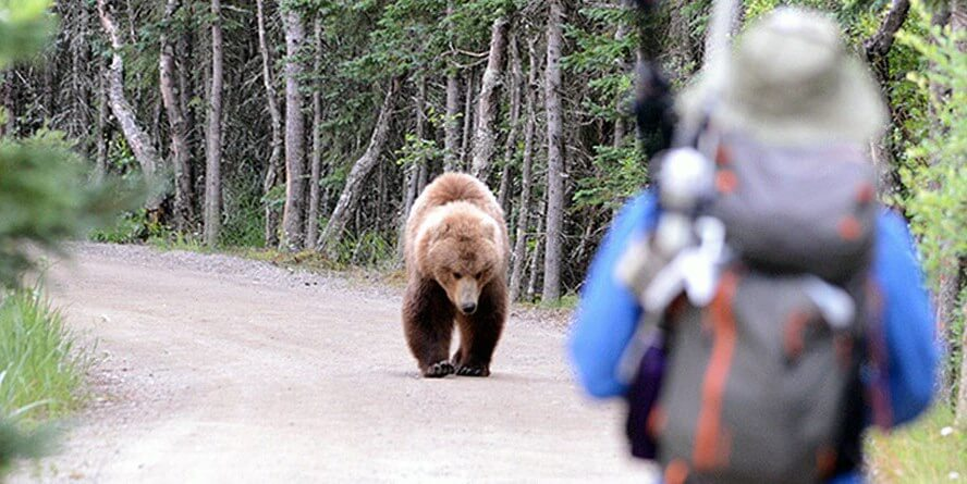 What to do when you see a bear - ©️  NPS