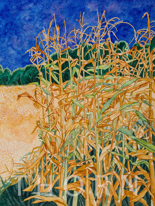 "CORN STALKS    Click on image for size and material options.   Prints Available From $27 - $310  Watercolor, 17""w x 12""h  Original Art For Sale $1,200  1999  Artist: Karen Thornberg"