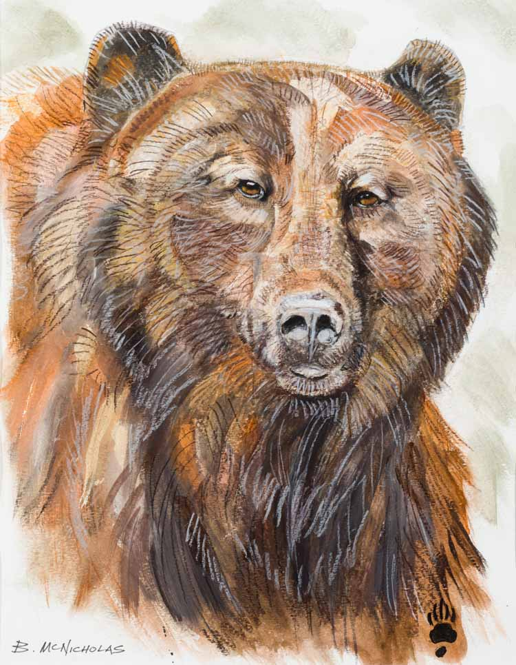 "A MONTANA GRIZZLY    Click on image for size and material options.   Prints Available From $27 - $310  Watercolor and color pencil  2012  Original 16""w x 20 ""h  Artist: Brian McNicholas"