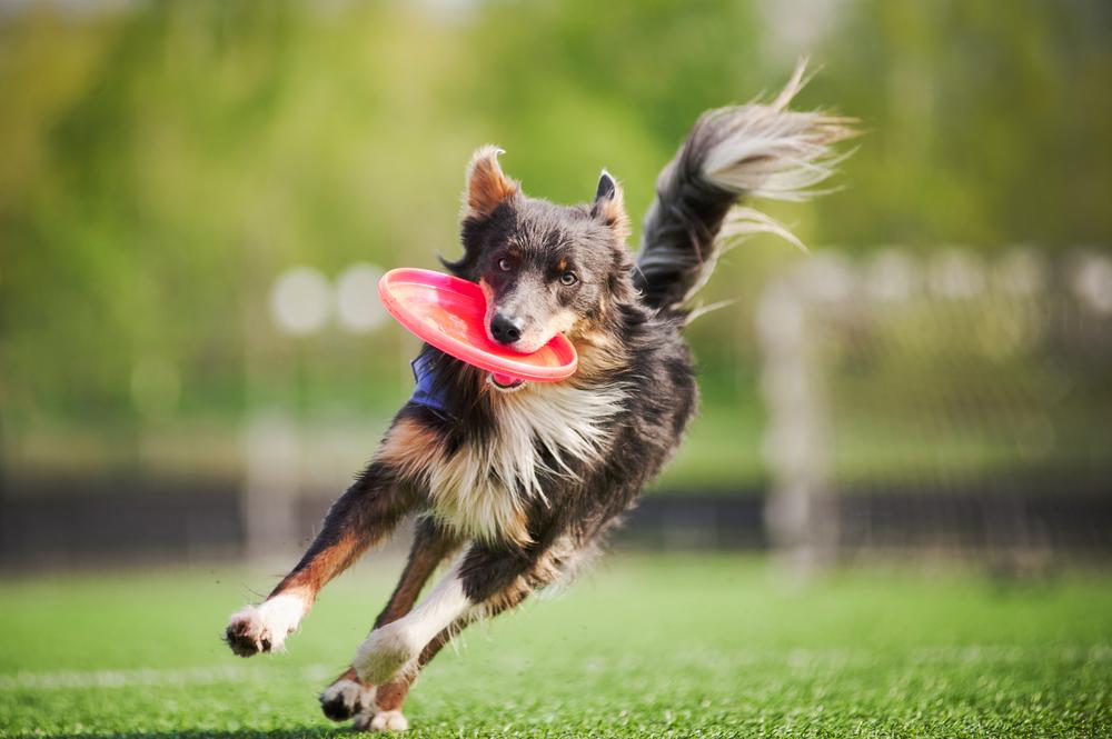 Dog wFrisbee.jpg