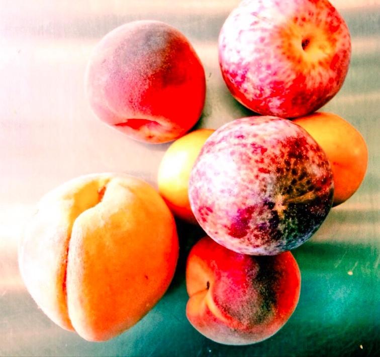 Fruit_detail Mandela Foods.jpg
