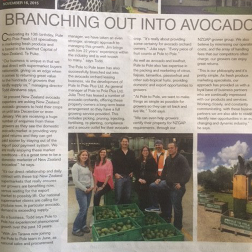branching-out-into-avocados
