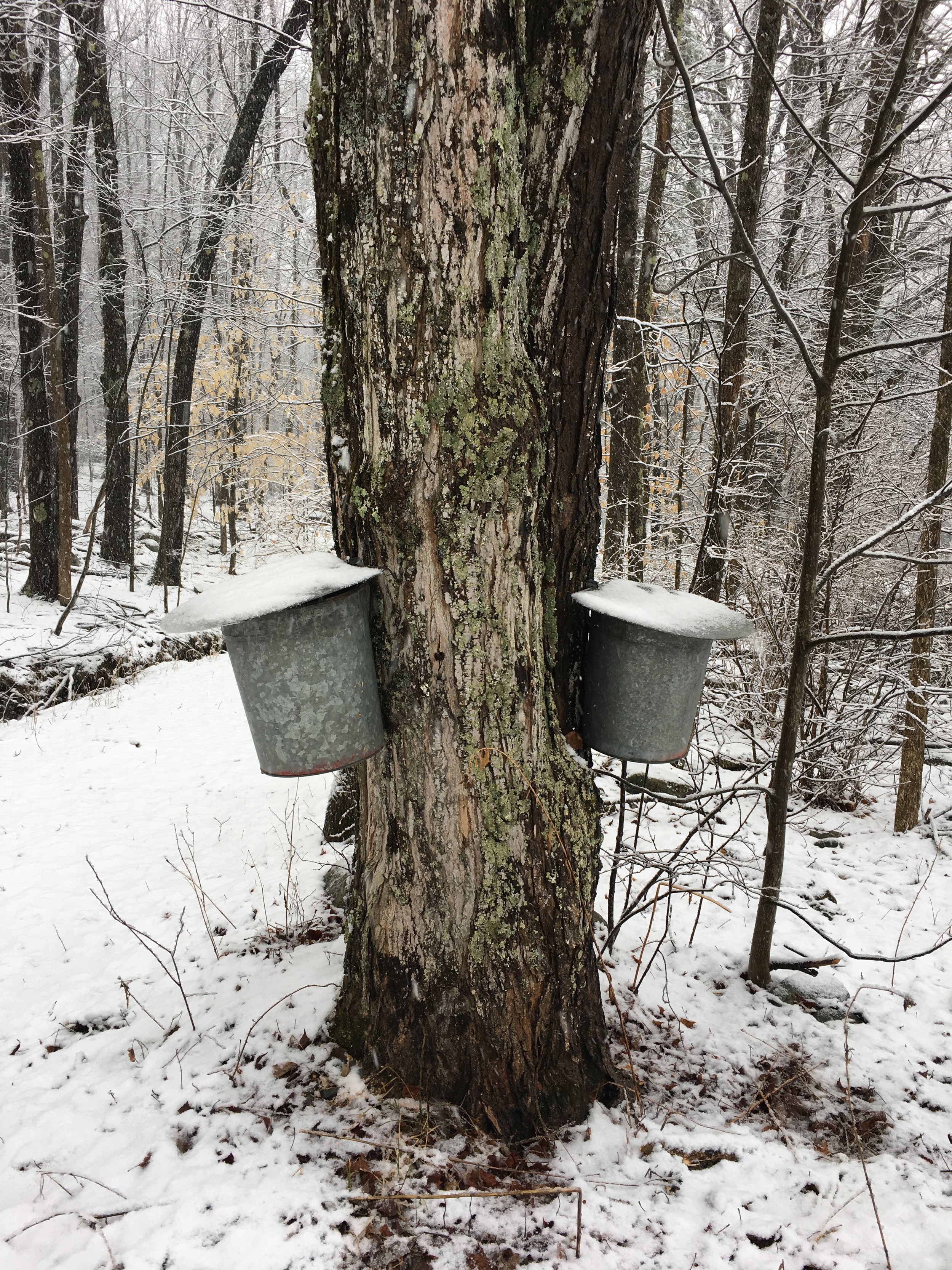 maple buckets1.png