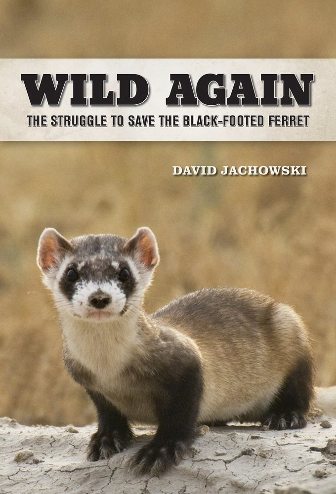 Michael's photo of a black footed ferret is the cover photo for the Wild Again book by David Jachowski.