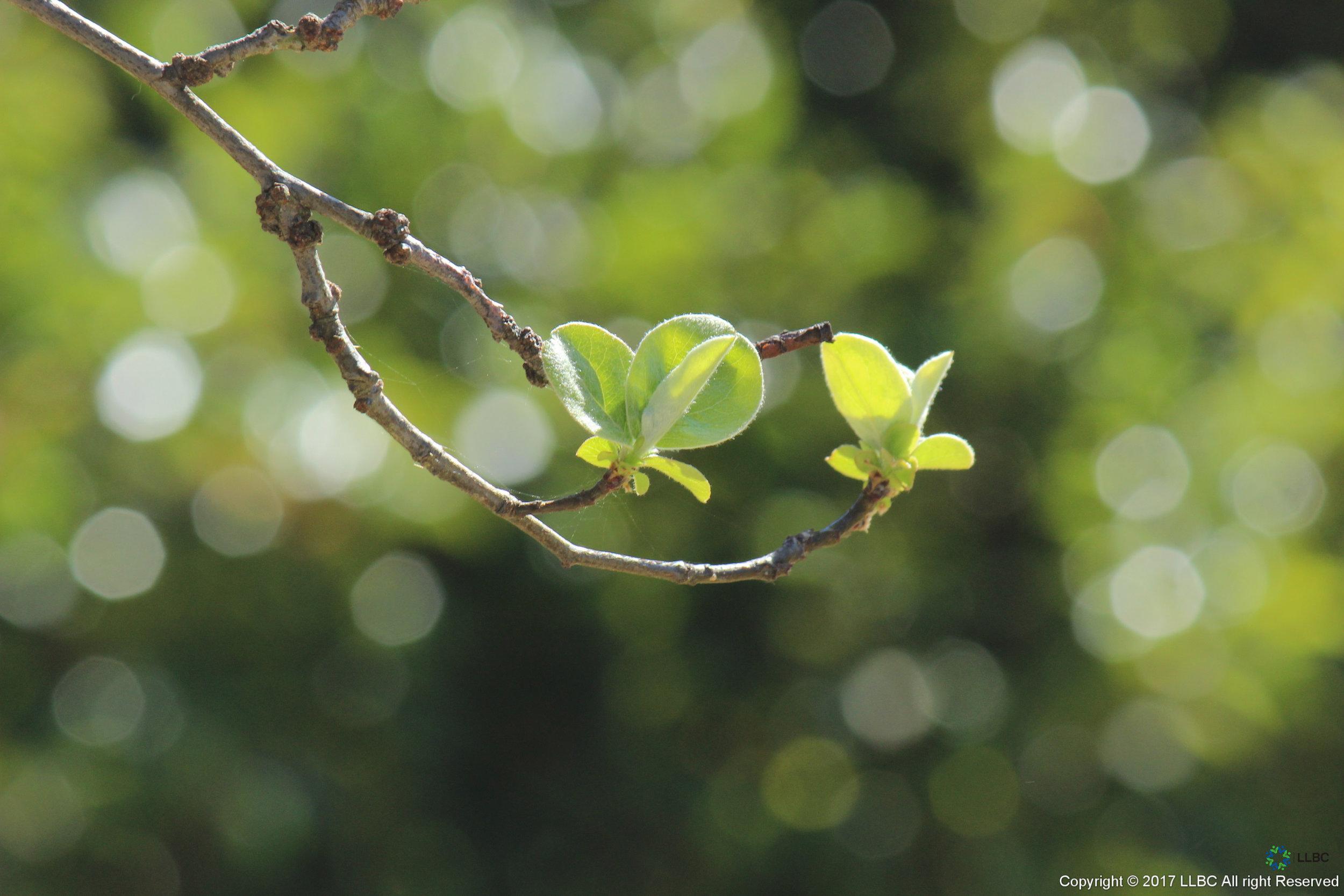 Branch - New Growth 3.jpg