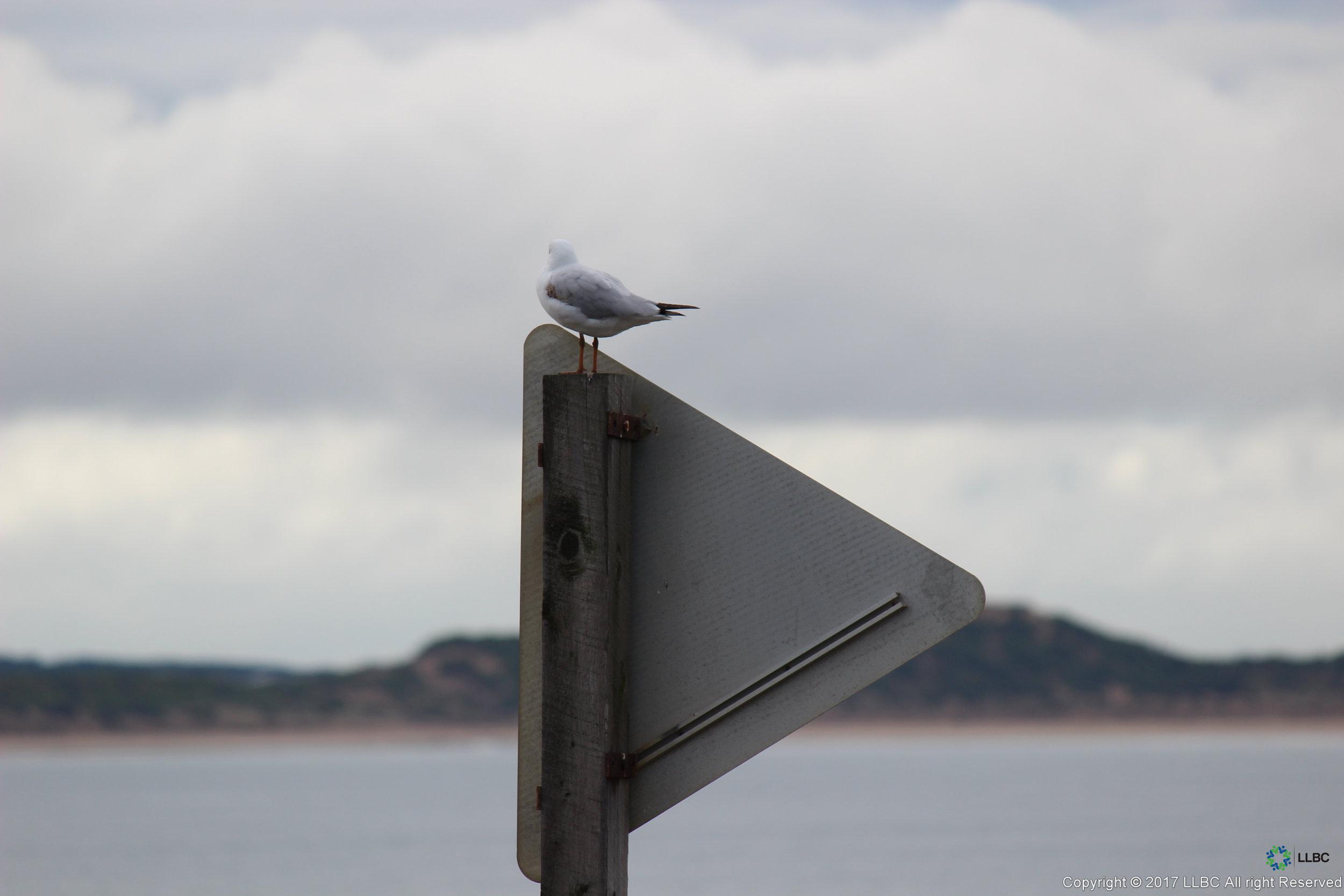 Sign from Behind - Bird.jpg