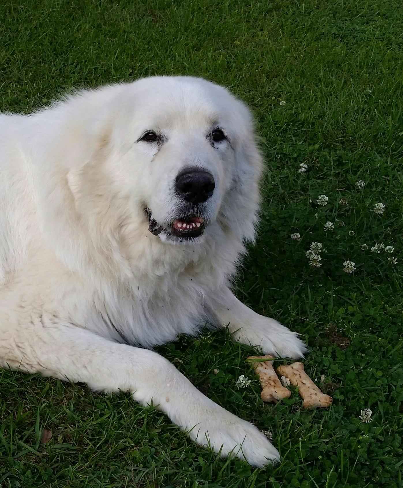 Goddi and his bones