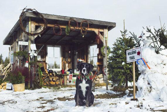 Barret's Tree Farm.jpg
