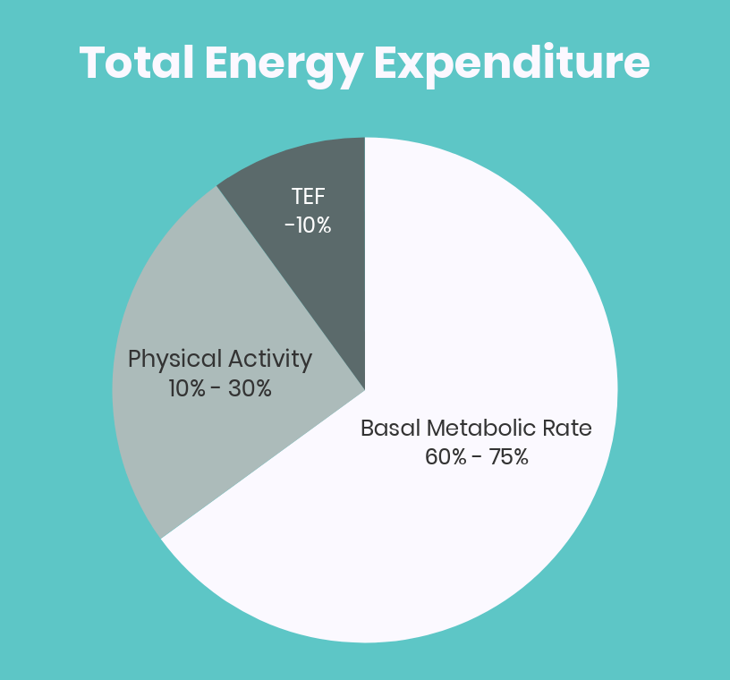 athlete-college-energy-expenditure
