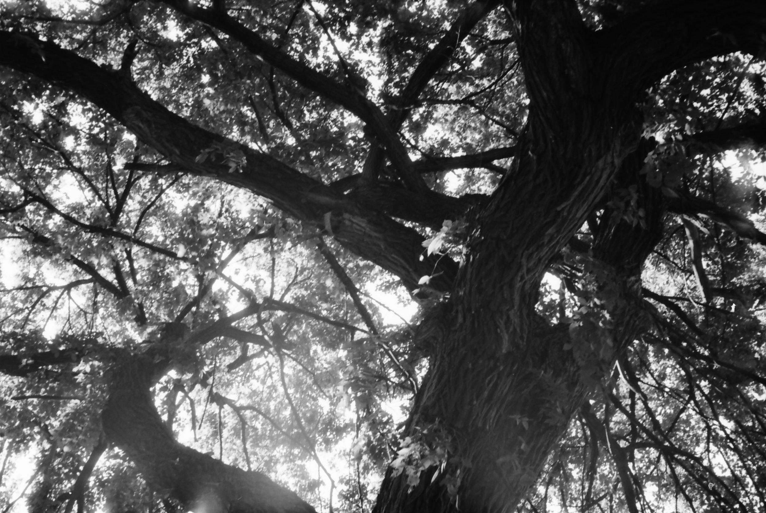 Debajo un árbol