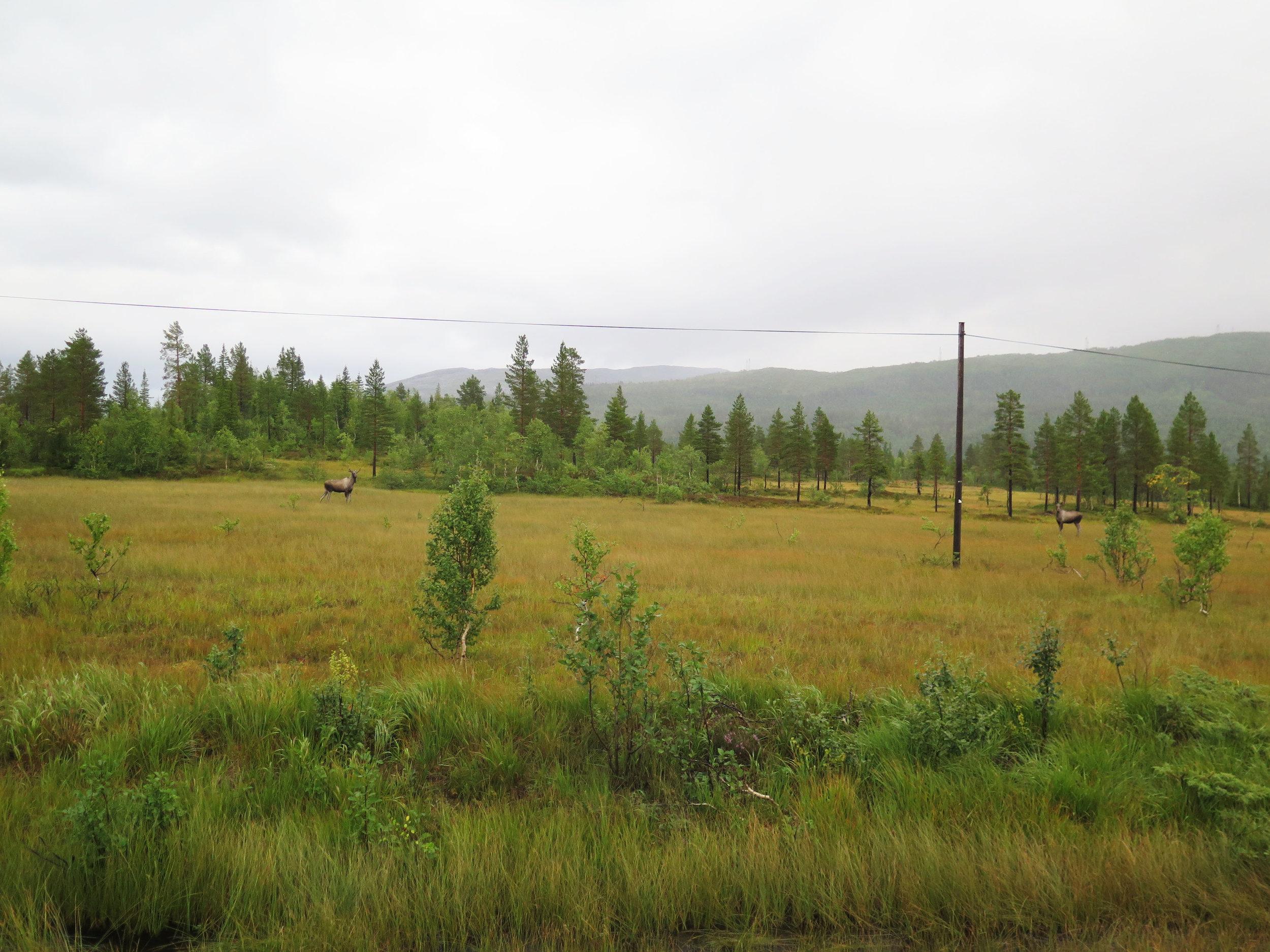 moose Norway