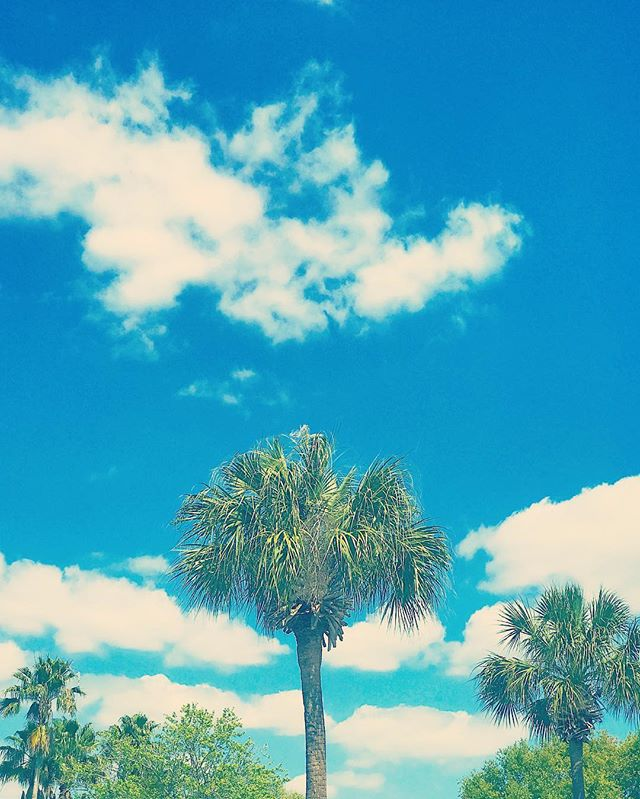 #Florida vibes. #wildoleander #palmtrees