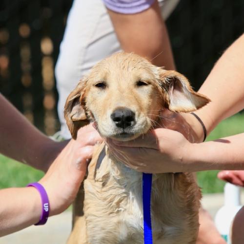 Stayton Veterinary Hospital Dog Wash Food Drive