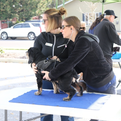 Partnering with Marion County Dog Shelter.jpg