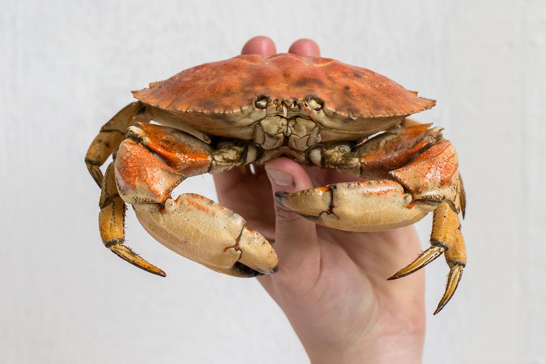 Crab -