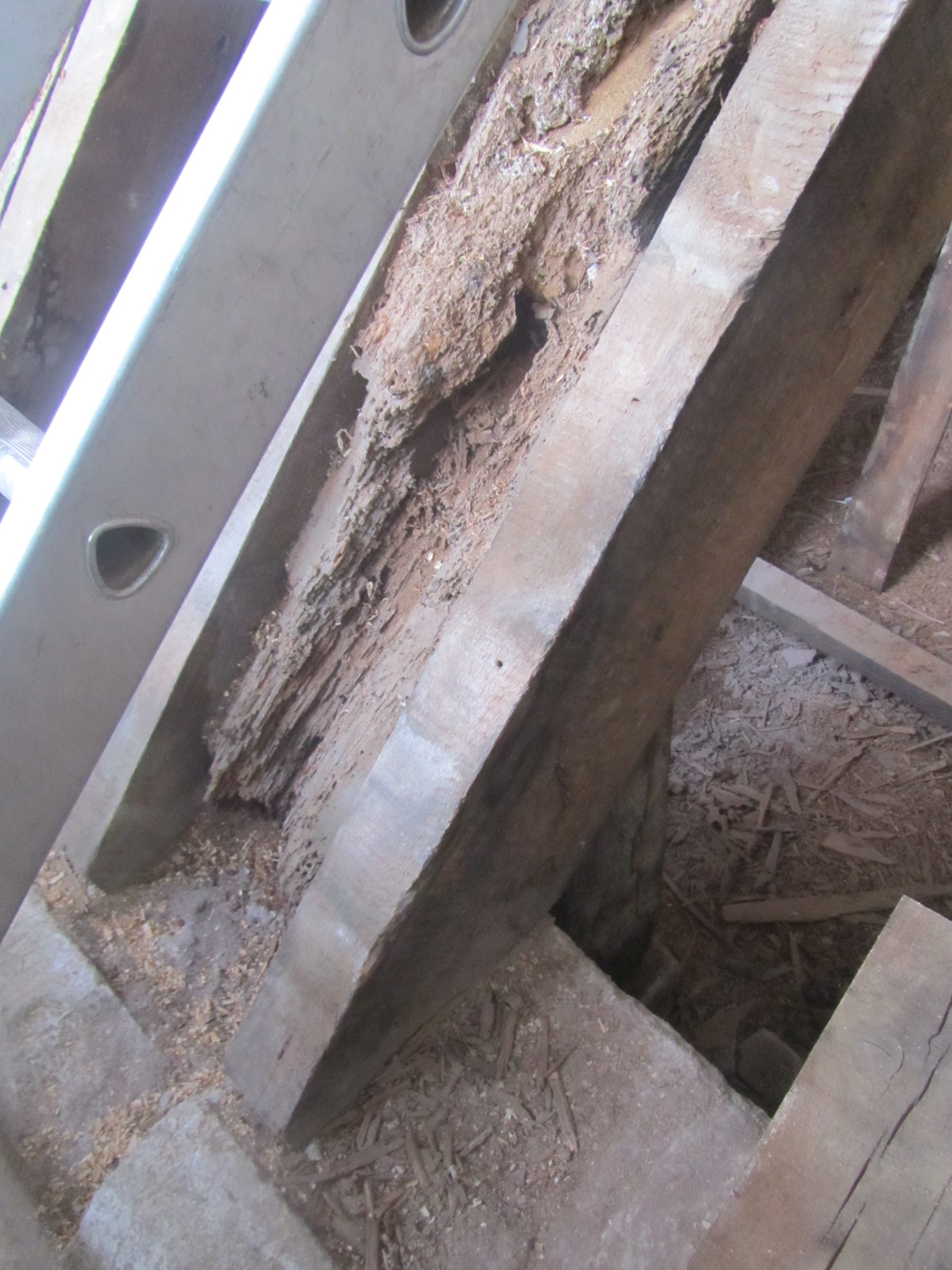Prior to works: Area of timber decay to structure to be repaired