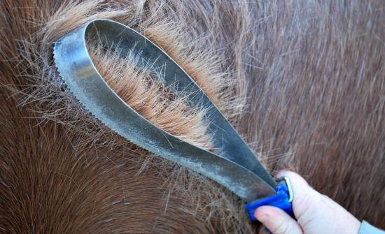 Horse-Shedding-Blade.jpg