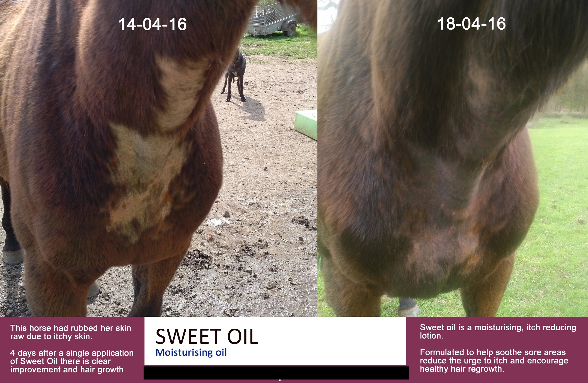 Mayhem-sweet-oil-case-study1.jpg