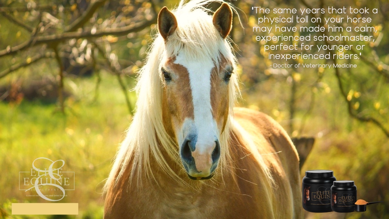22 July 2019 - Elite Equine and retiring your horse.jpg