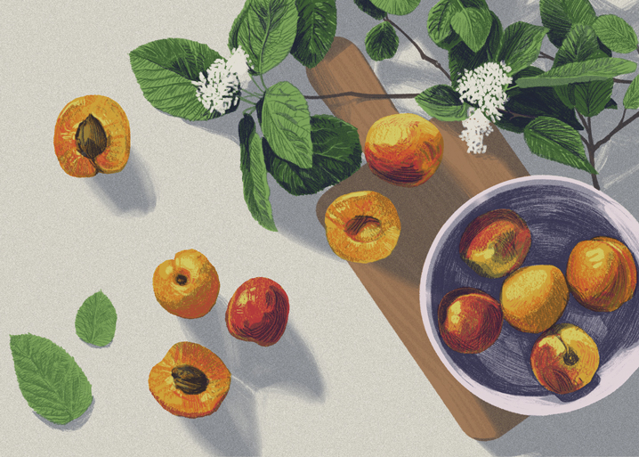 APRICOTS   Self initiated, unpublished illustration