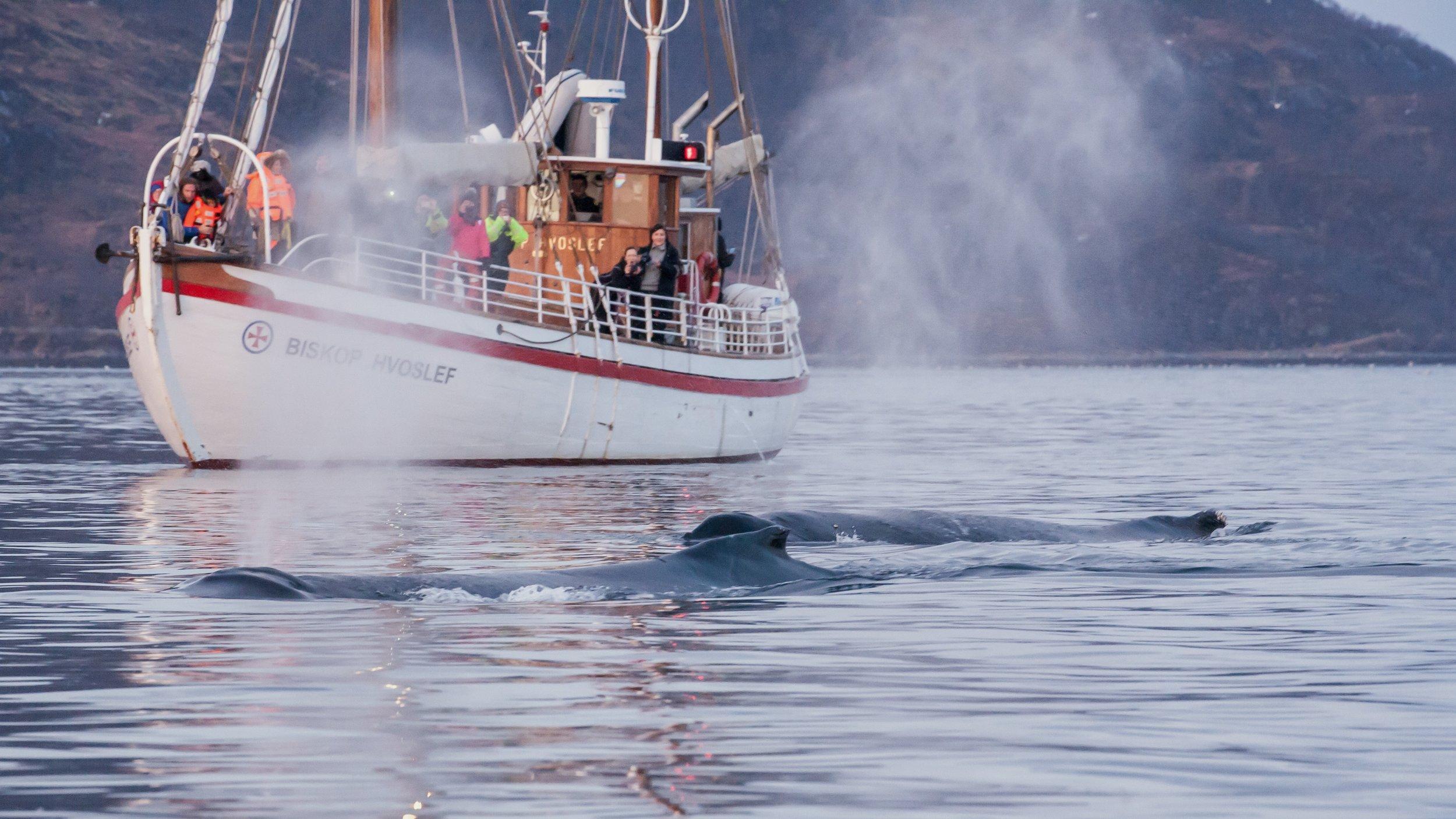 20141128 Whale watching boat-21.jpg