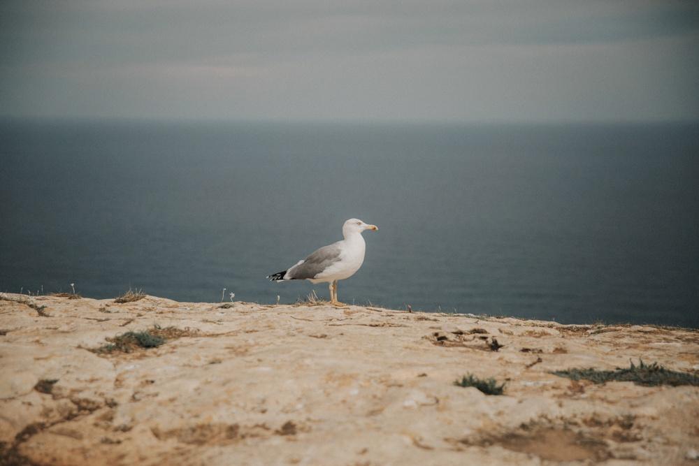 Boda_Formentera-3.jpg