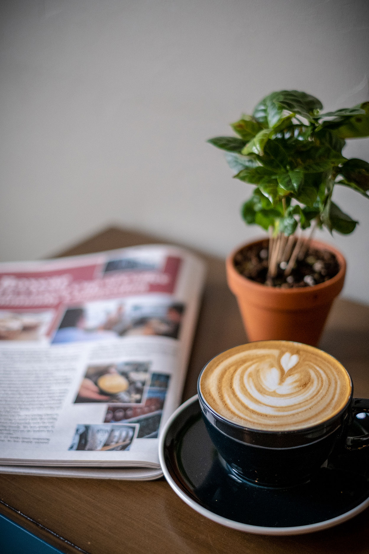 coffee-magazine-plant.jpg