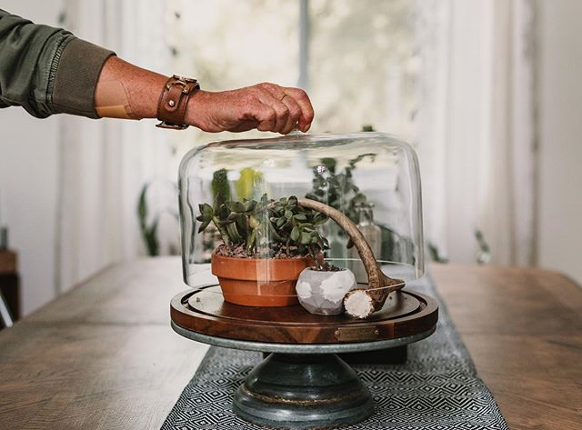 You call it a cake server. I call it a centerpiece. . . . . . #homedecor #diyhomedecor #homeinspiration #bohodecor #plants #homestylist #interiorstyling #thinkoutsidethebox