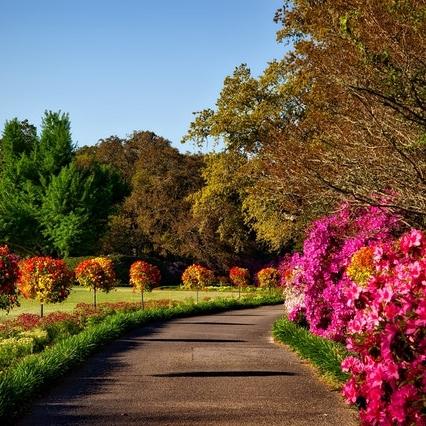 bellingrath-gardens-alabama-landscape-scenic-158028.jpeg