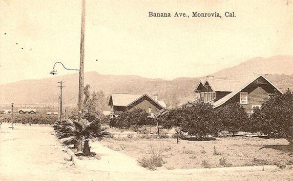 1910_m_banana.jpg