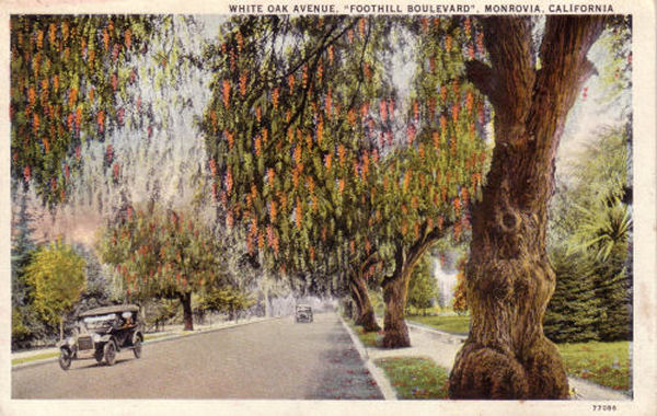 1920_whiteoak.jpg