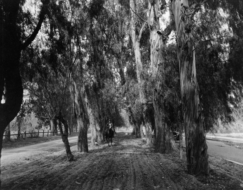 Arcadia-Santa-Anita-Double-Drive-with-Middle-Bridal-Path.jpg